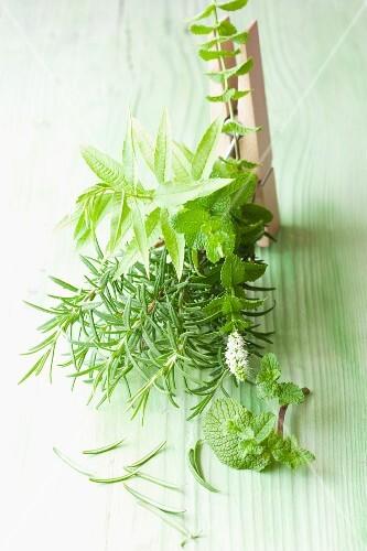 Rosemary, mint and lemon balm