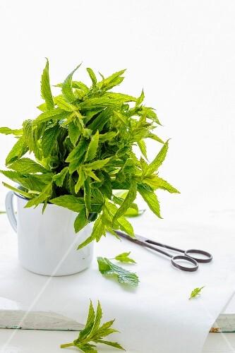 A mug of fresh mint