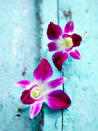 Orchids on blue wood