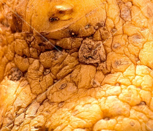 An old, wrinkly potato (close-up, detail)