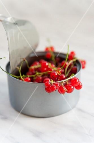 Fresh redcurrants in a metal tin