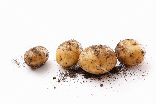 Four dirty potatoes on a white surface