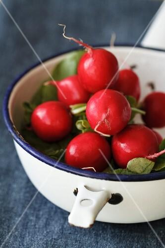 Fresh radishes in an enamel pot