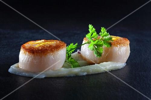 Fried scallops on celery purée