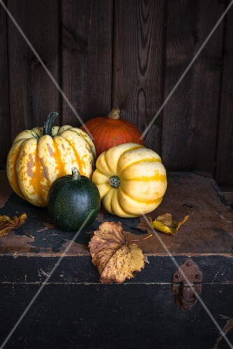 Various pumpkins with autumnal leaves on an old wooden chest