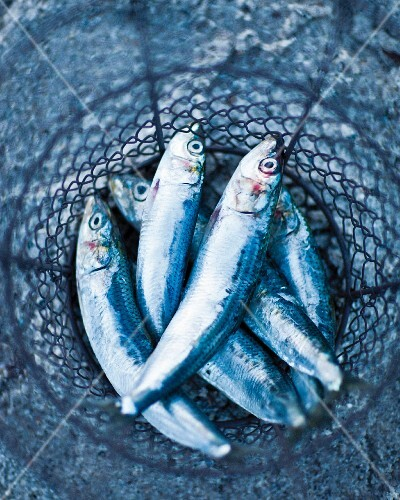 Freshly caught anchovies in a wire basket