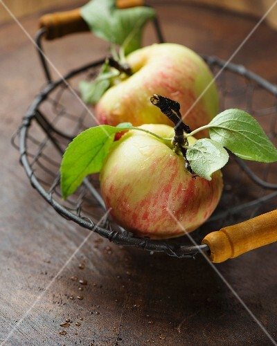 Two apples in a wire basket
