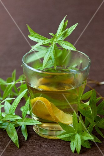 Lemon balm tea with lemon slices