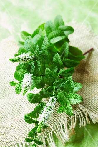 Fresh peppermint on a piece of jute