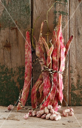 A bundle of borlotti beans