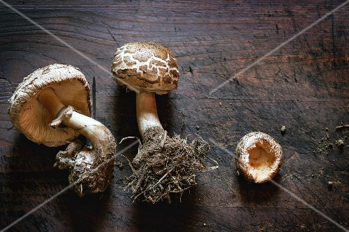 Fresh wild mushrooms with mycelium on a wooden surface