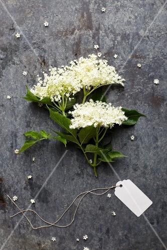 A sprig of freshly picked elderflowers (seen from above)