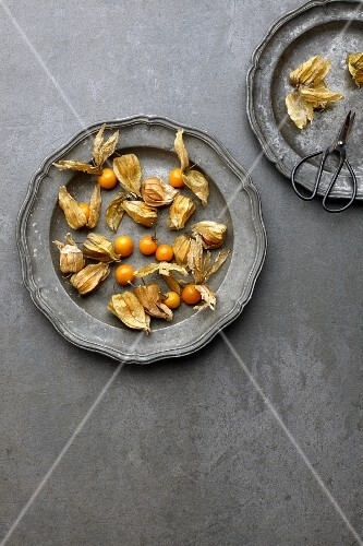 Fresh physalis on a vintage metal plate (seen from above)