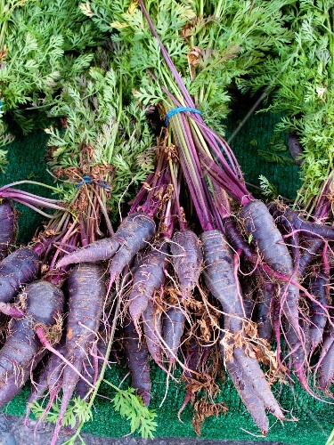 Bunches of purple carrots