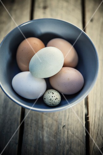 Chicken eggs and a quail's egg