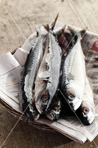 Fresh mackerel on a piece of newspaper