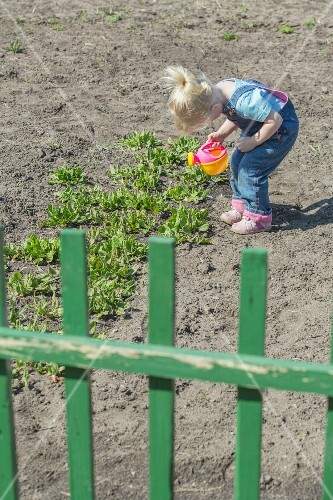 A little girl watering plants with her watering can