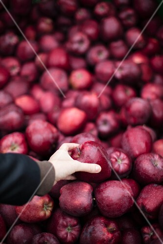 Red apples on a market stall