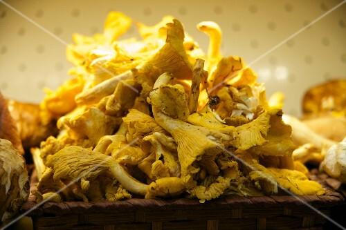 A pile of fresh chanterelle mushrooms