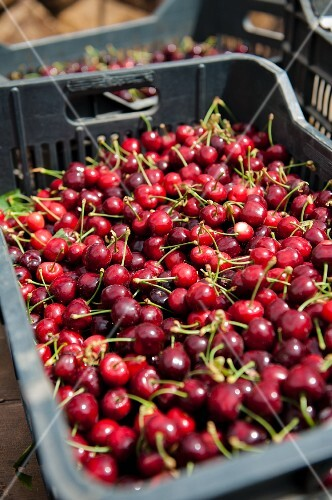 Fresh cherries in a crate at a market