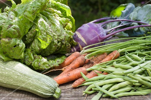 An arrangement of vegetables featuring lettuce, courgettes, carrots, green beans and kohlrabi