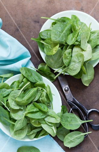 Baby spinach on a white plate