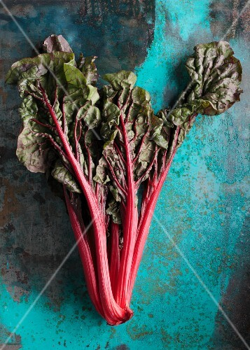 Red-stemmed chard on a coloured surface