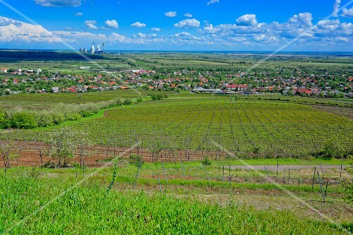 The famous Hungarian Welschriesling winegrowing region of Abasár