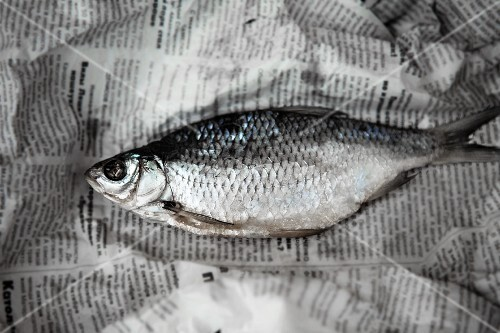 A salt water fish on a piece of newspaper (seen from above)