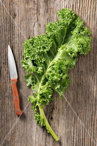 A kale leaf