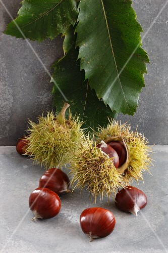 An arrangement of chestnuts