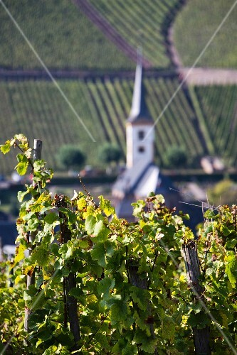 Bremm seen from vineyards, Rhineland Palatinate, Germany