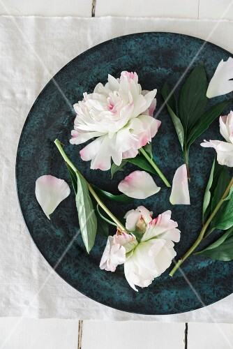 Peony flowers in a bowl (seen from above)