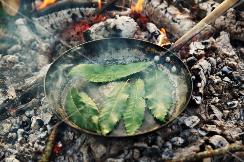Edible chestnut leaves being roasted in a pan over an open fire