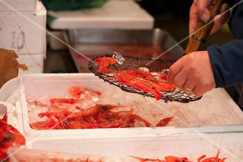 Prawns at the Tsukiji fish market in Tokyo, Japan