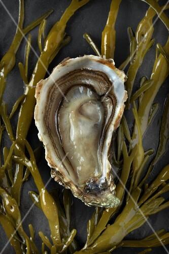 A fresh half oyster on seaweed
