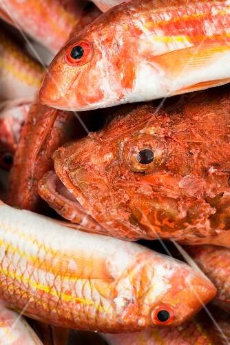 Fresh fish, Porto Cesareo, Italy