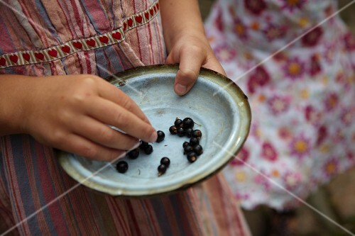Vintage dish of blackcurrants held in girl's hands