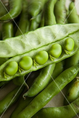 Broad beans in an open pod