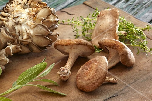 Various fresh mushrooms and herbs on a wooden board