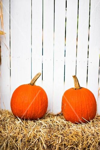Pumpkins on a farm