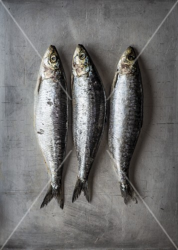Three fresh sardines (seen from above)