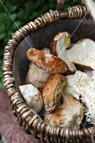 Fresh porcini mushrooms in a basket