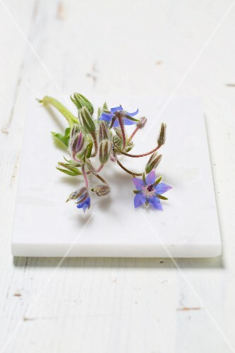 Borage flowers on a white stone board