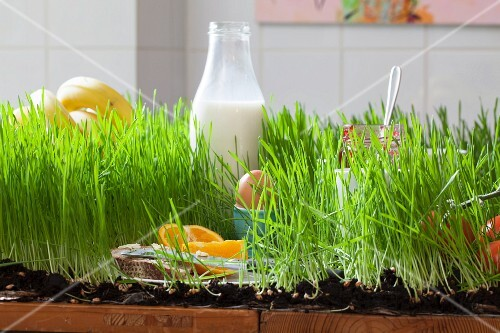 A laid breakfast table planted with grass in a kitchen