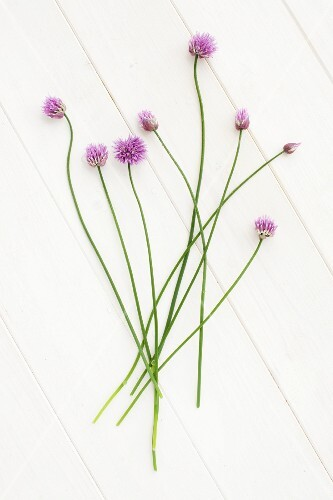 Flowering chives on a white surface