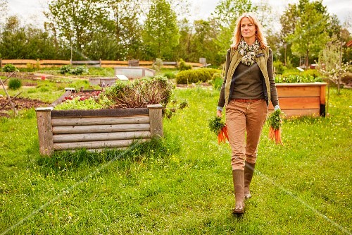 A woman in a garden carrying freshly harvested carrots