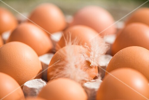 Brown hen's eggs in an egg box (close-up)