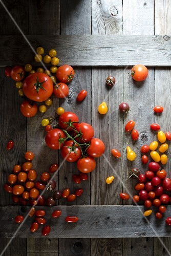An arrangement of tomatoes in various colours and sizes