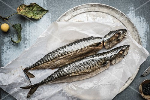 Two mackerel on a piece of paper (seen from above)